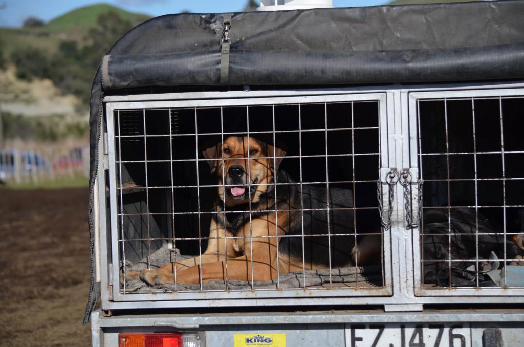 Puppy in Truck