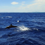 Dolphin 'farewelling' us from Fiji